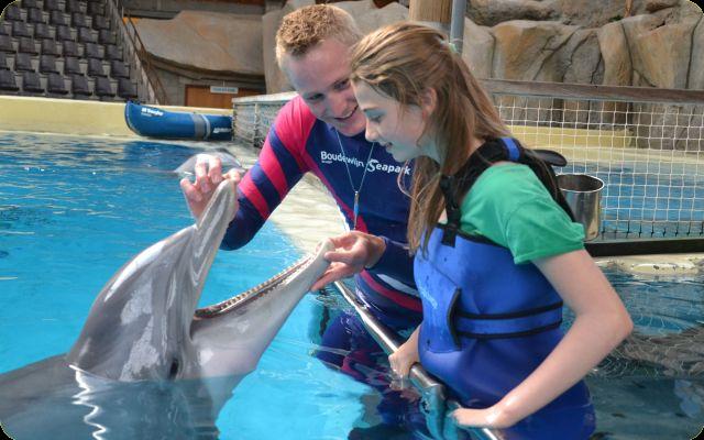 Dolfijnenkamp Junior